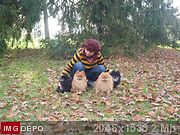 Шпицы малые и карлики(померанский) - Страница 15 04b127fa
